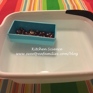 KitchenScience15